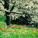 مجموعه اقدامات شهرداری در استقبال از بهار