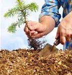 مسئول فضای سبز شهرداری خبر داد: کاشت ۲۰۰۰ نهال درخت درسطح شهر